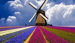 Istoria olandeza a lalelelor